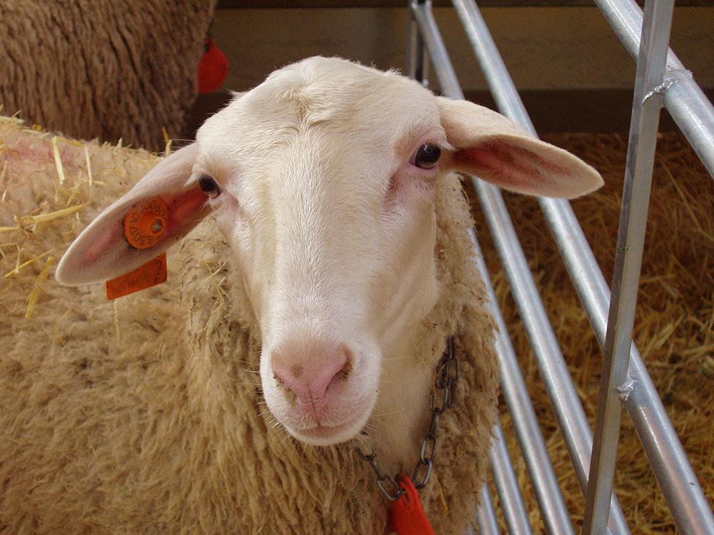 ANGRA participa en la Feria Industrial, Agrícola y Ganadera de los Monegros (FEMOGA)
