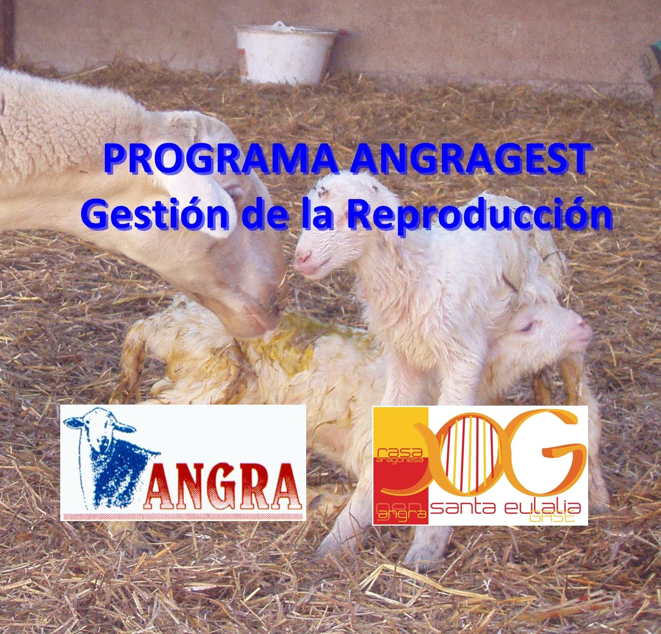 EL PROGRAMA ANGRAGEST SE CONSOLIDA CON GRAN ACEPTACION
